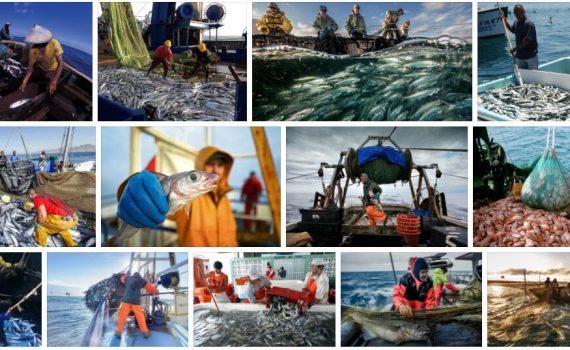 Study Fishing Industry